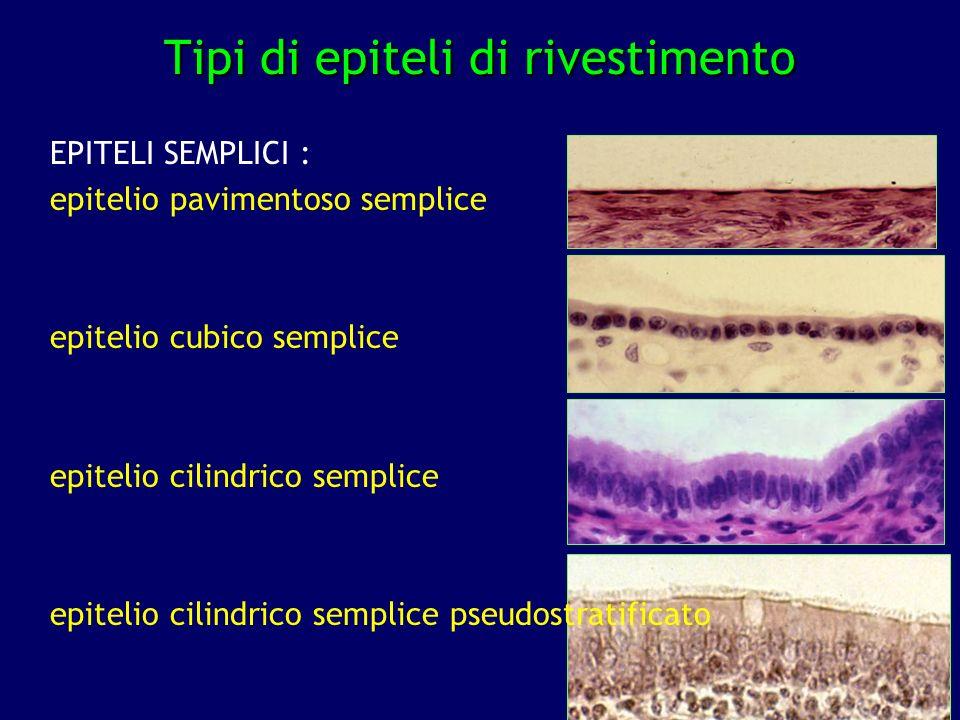 Tipi di epiteli di rivestimento
