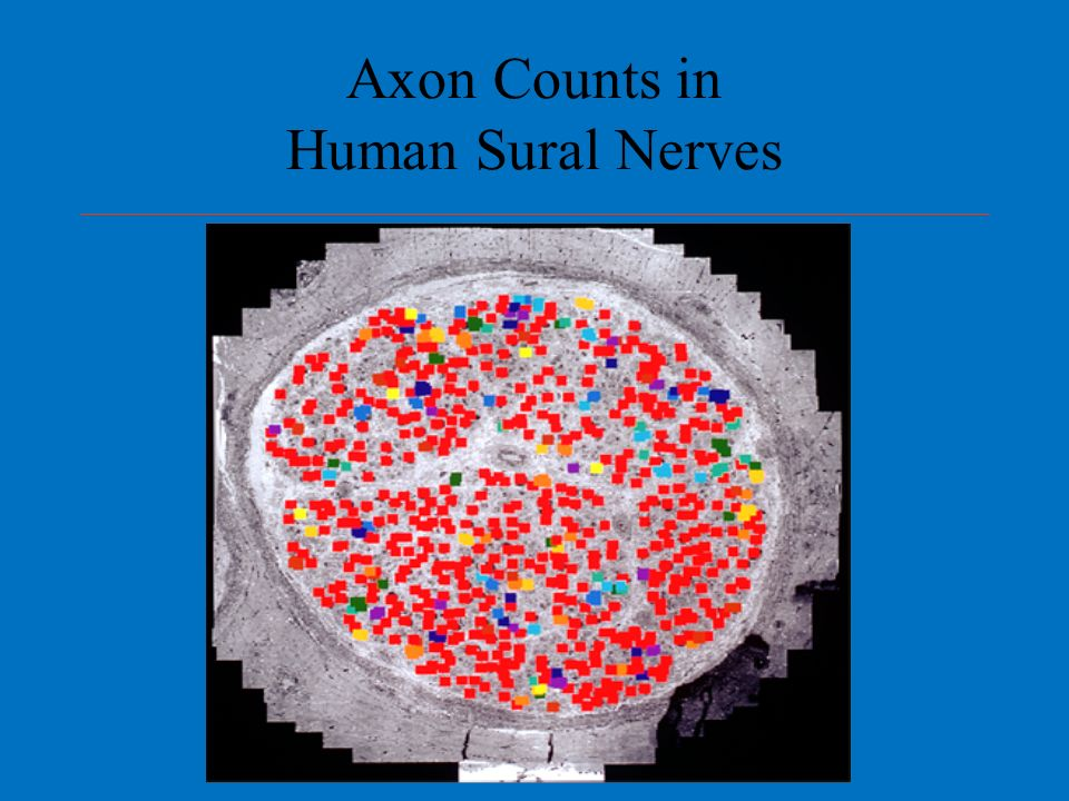 Axon Counts in Human Sural Nerves