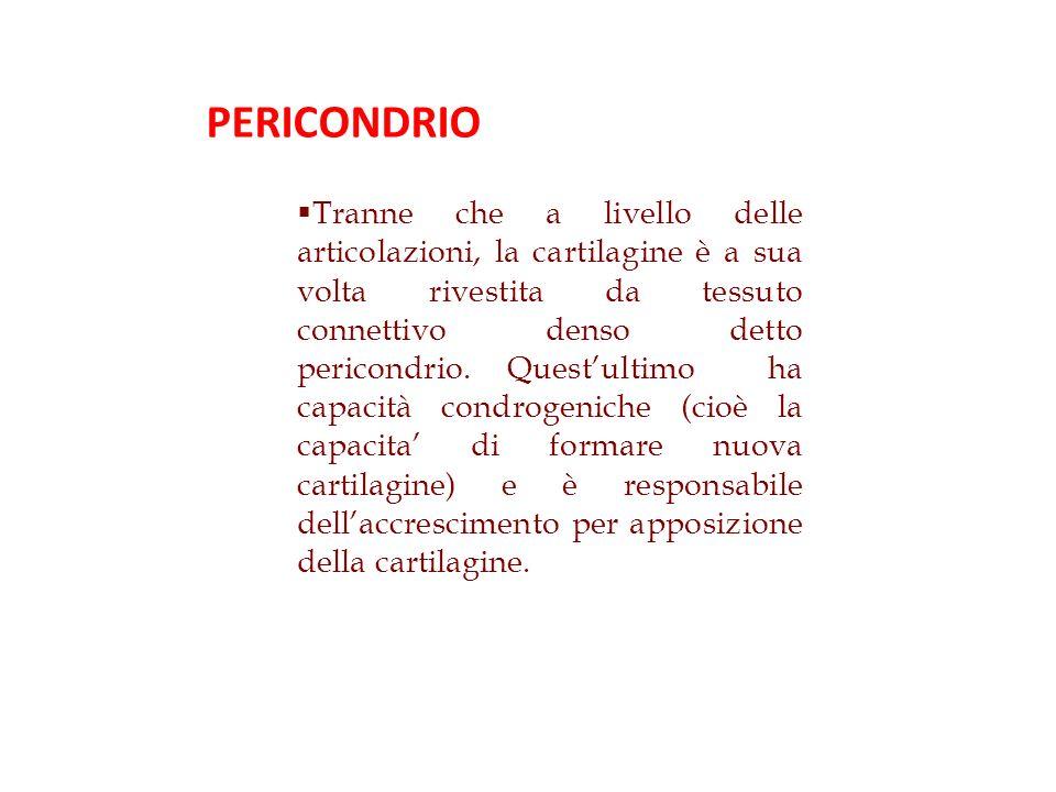PERICONDRIO