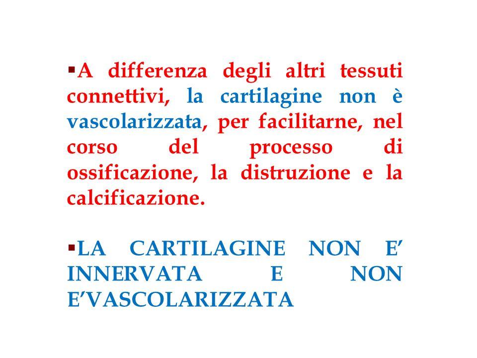A differenza degli altri tessuti connettivi, la cartilagine non è vascolarizzata, per facilitarne, nel corso del processo di ossificazione, la distruzione e la calcificazione.