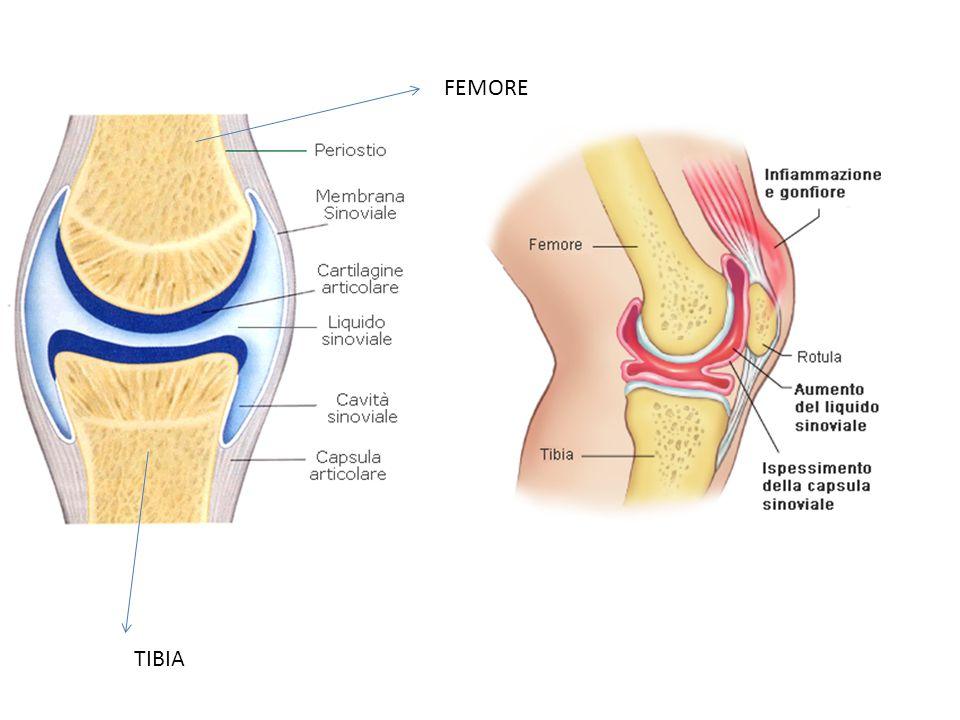 FEMORE TIBIA