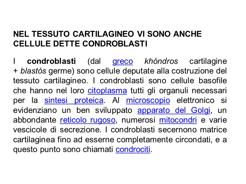 NEL TESSUTO CARTILAGINEO VI SONO ANCHE CELLULE DETTE CONDROBLASTI