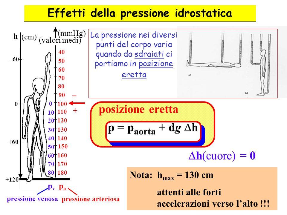 Effetti della pressione idrostatica