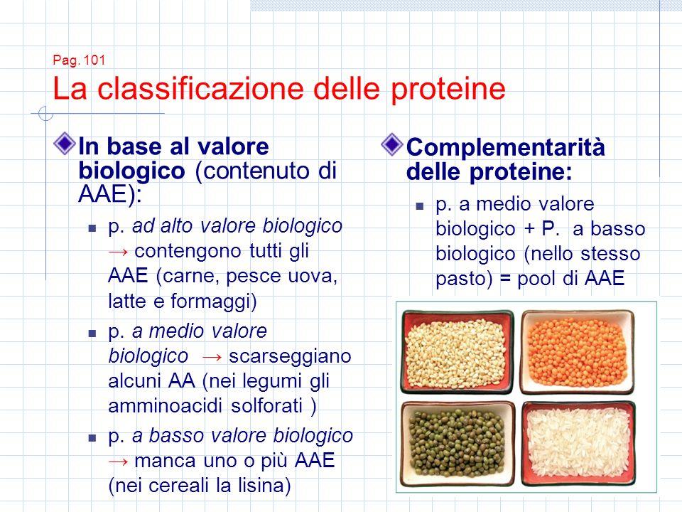 Pag. 101 La classificazione delle proteine