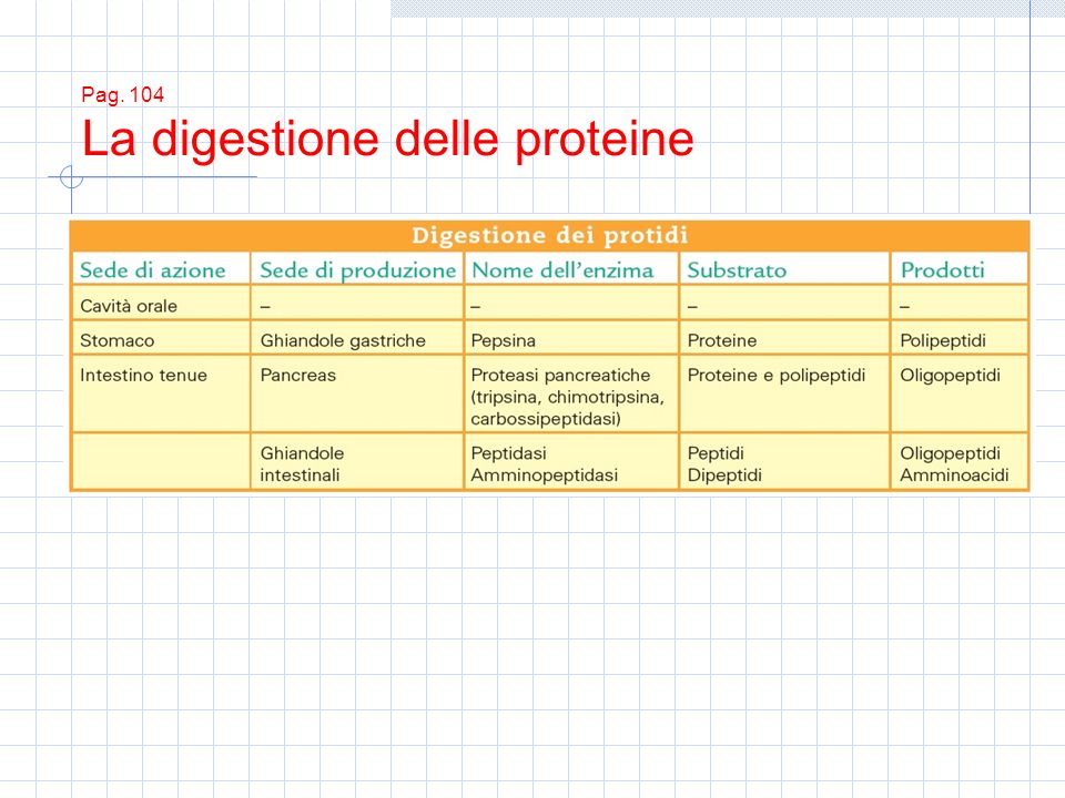 Pag. 104 La digestione delle proteine
