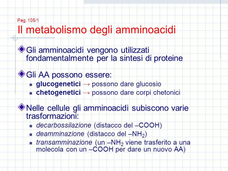 Pag. 105/1 Il metabolismo degli amminoacidi