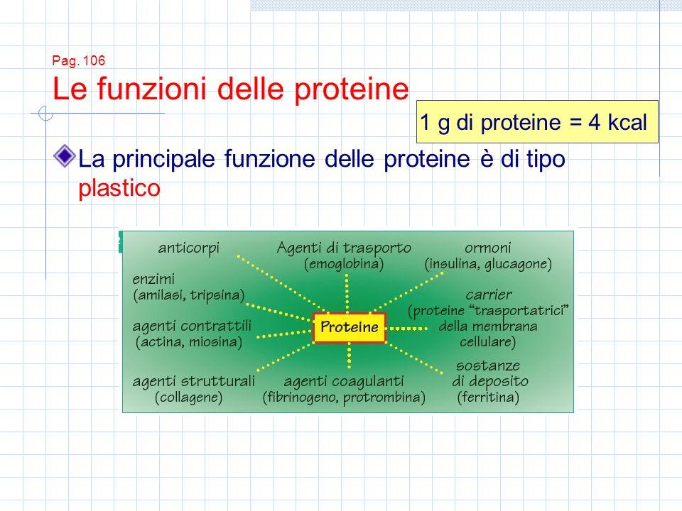 Pag. 106 Le funzioni delle proteine