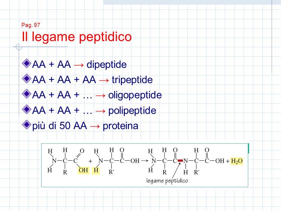 Pag. 97 Il legame peptidico