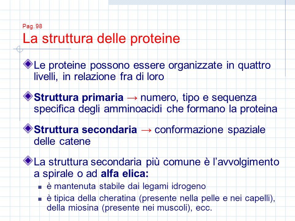 Struttura secondaria → conformazione spaziale delle catene