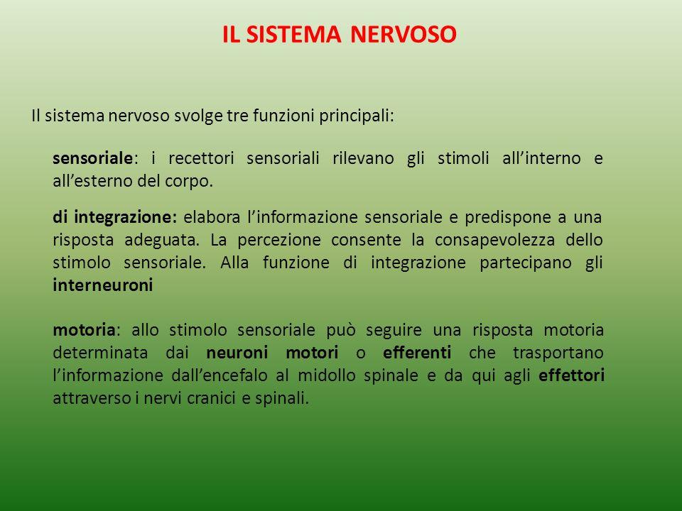 IL SISTEMA NERVOSO Il sistema nervoso svolge tre funzioni principali:
