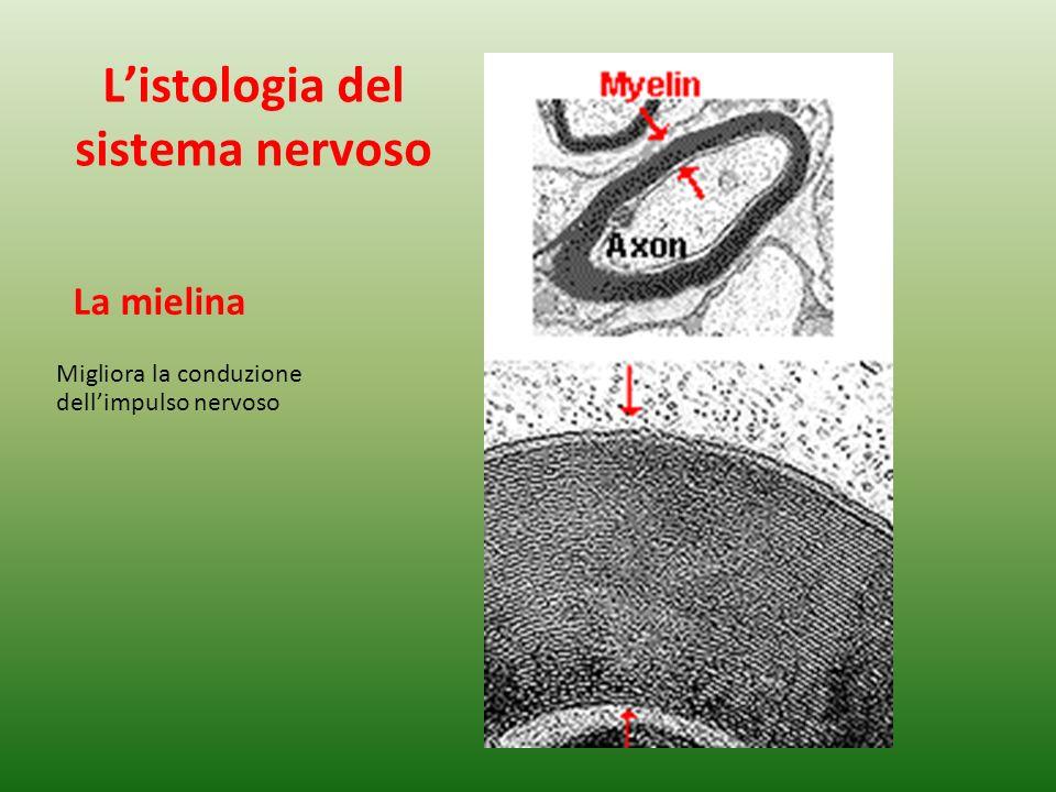 L'istologia del sistema nervoso