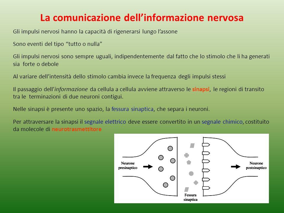 La comunicazione dell'informazione nervosa