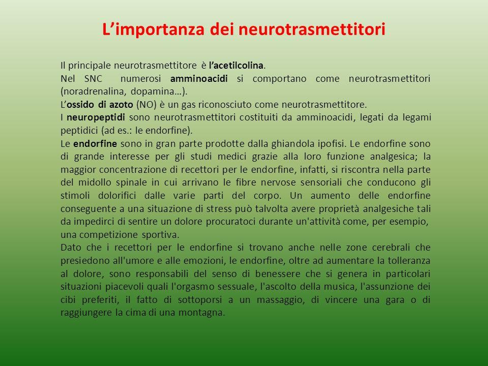 L'importanza dei neurotrasmettitori