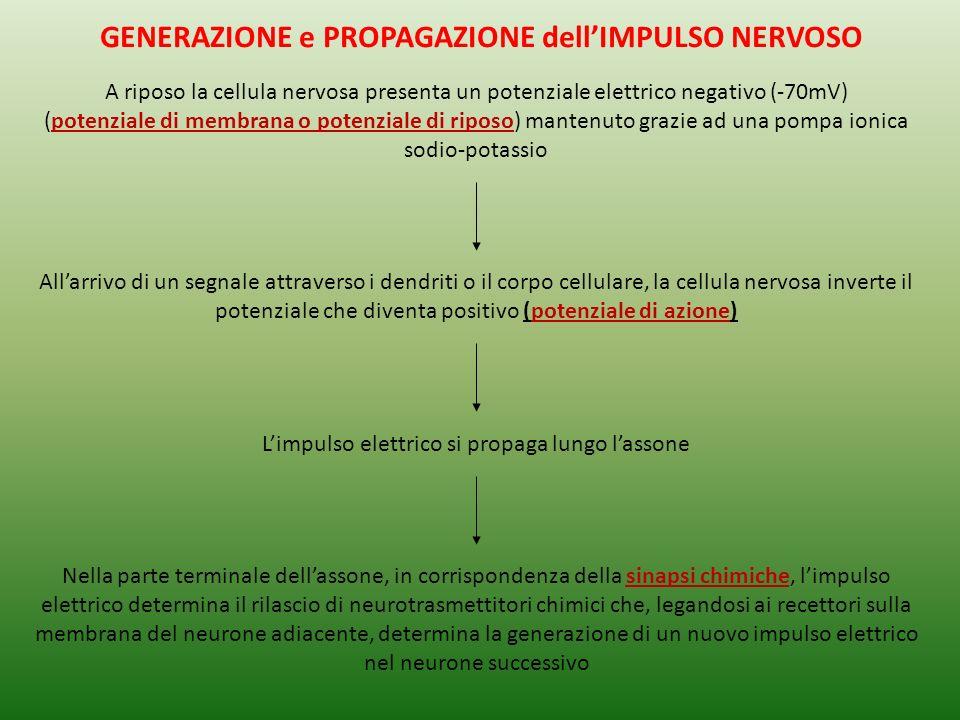 GENERAZIONE e PROPAGAZIONE dell'IMPULSO NERVOSO