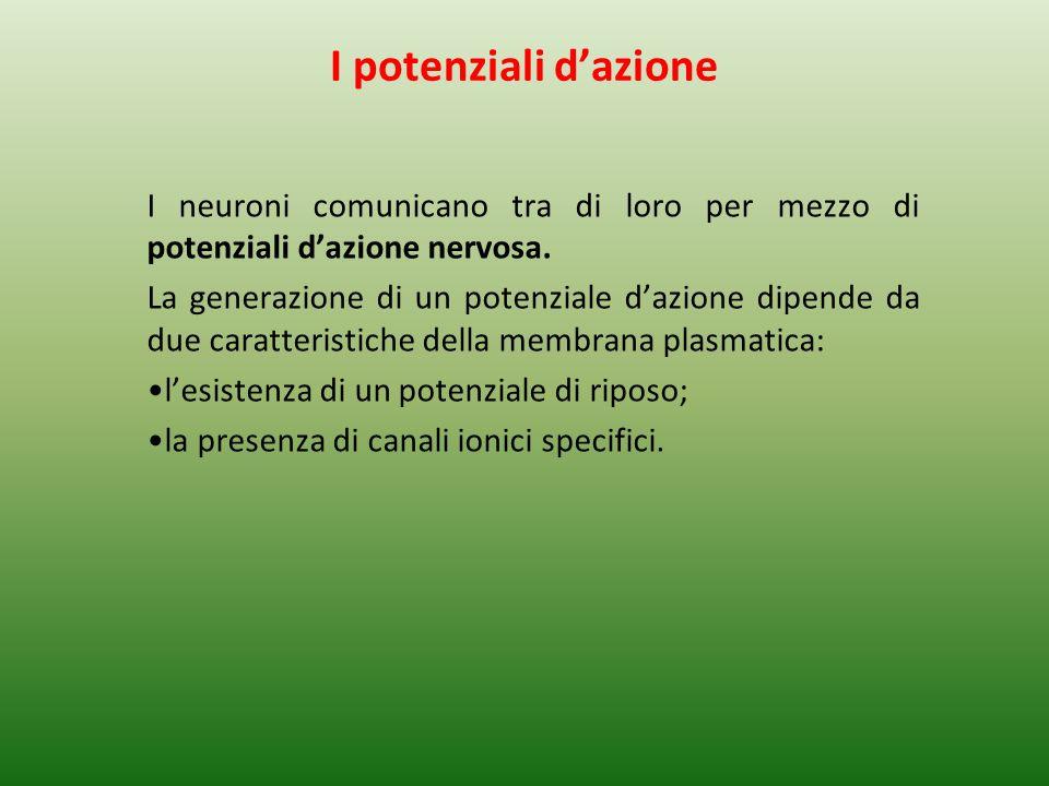 I potenziali d'azione I neuroni comunicano tra di loro per mezzo di potenziali d'azione nervosa.