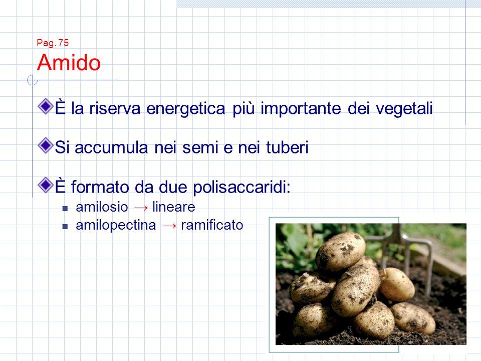 È la riserva energetica più importante dei vegetali