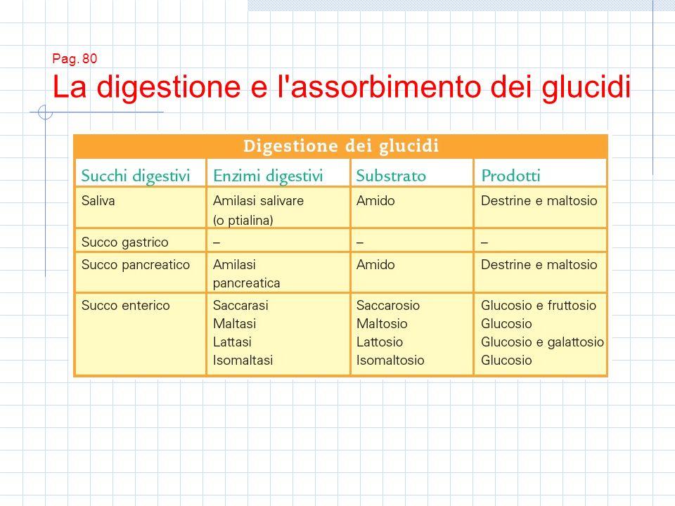 Pag. 80 La digestione e l assorbimento dei glucidi