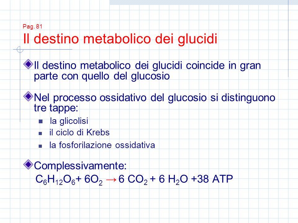 Pag. 81 Il destino metabolico dei glucidi