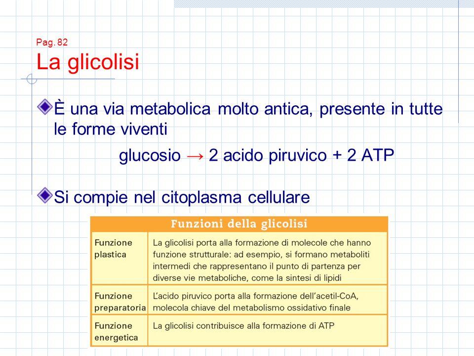 glucosio → 2 acido piruvico + 2 ATP
