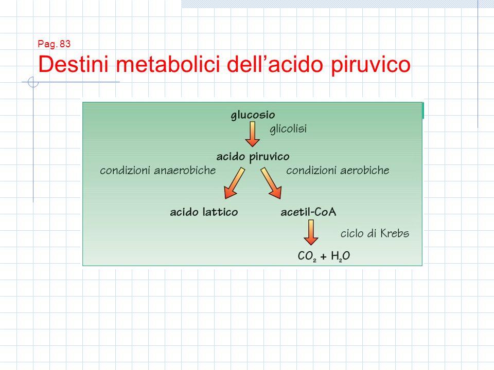 Pag. 83 Destini metabolici dell'acido piruvico
