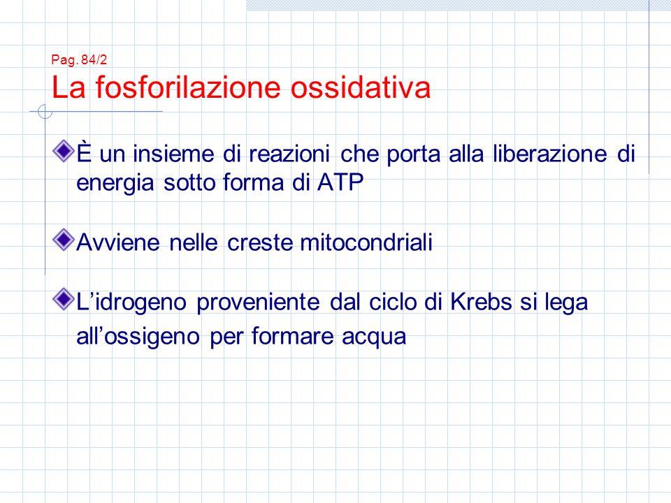 Pag. 84/2 La fosforilazione ossidativa