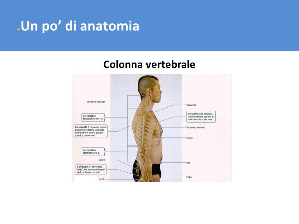 .Un po' di anatomia Colonna vertebrale