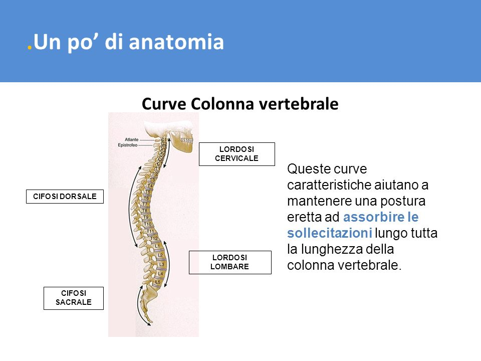 Curve Colonna vertebrale