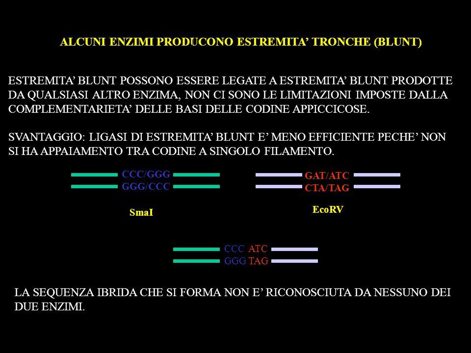 ALCUNI ENZIMI PRODUCONO ESTREMITA' TRONCHE (BLUNT)
