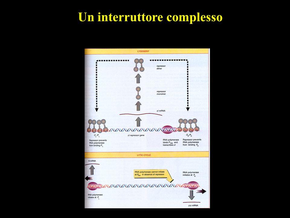 Un interruttore complesso