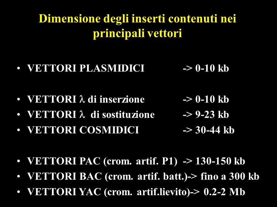 Dimensione degli inserti contenuti nei principali vettori