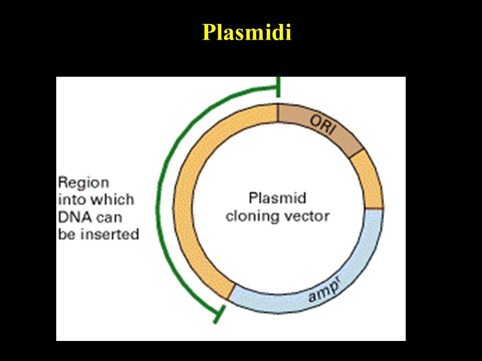 Plasmidi