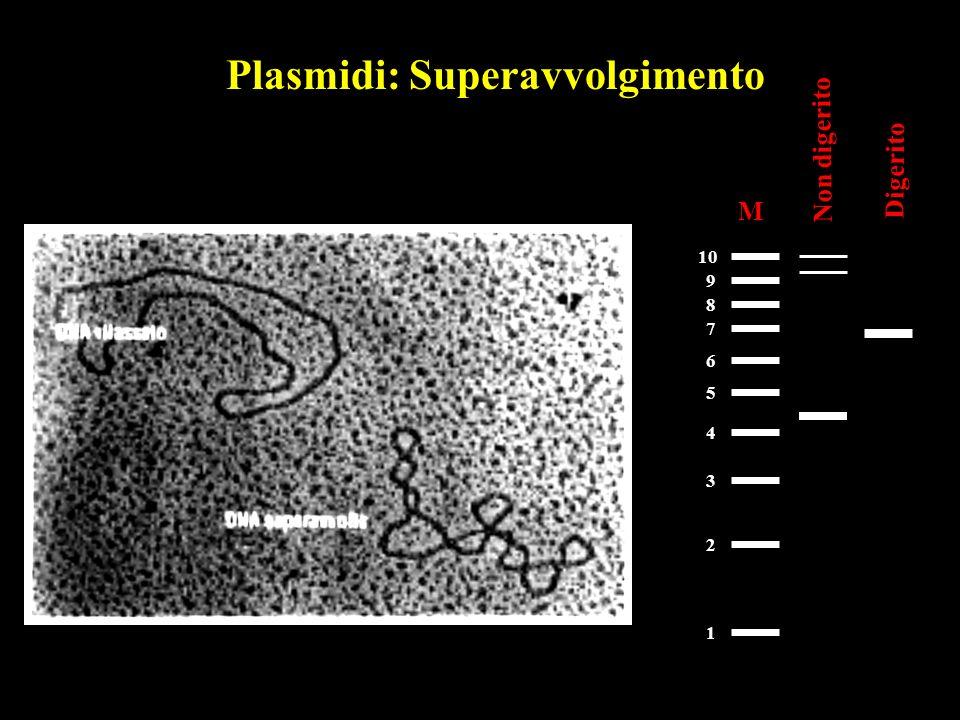 Plasmidi: Superavvolgimento