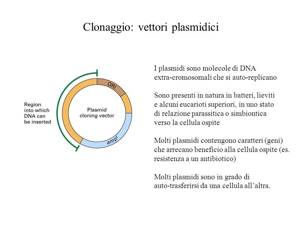 Clonaggio: vettori plasmidici