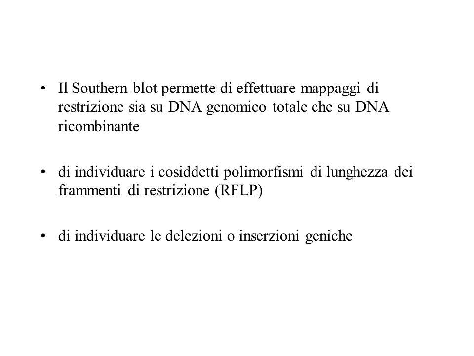 Il Southern blot permette di effettuare mappaggi di restrizione sia su DNA genomico totale che su DNA ricombinante
