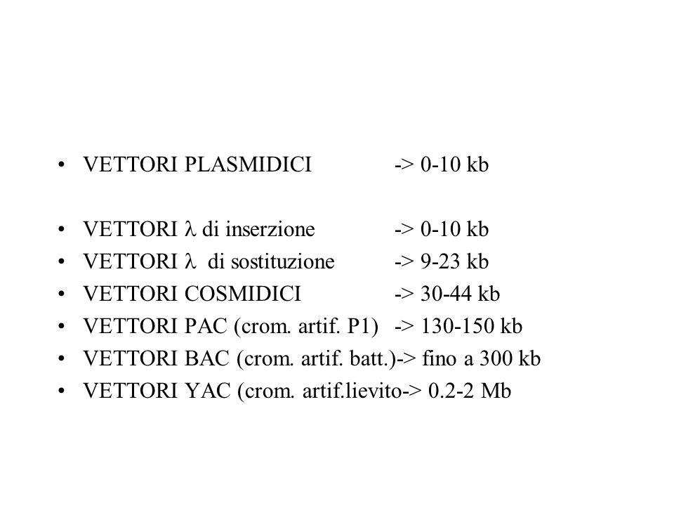 VETTORI PLASMIDICI -> 0-10 kb