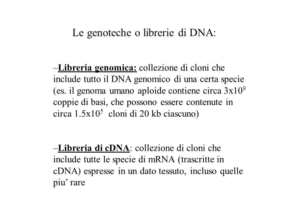Le genoteche o librerie di DNA: