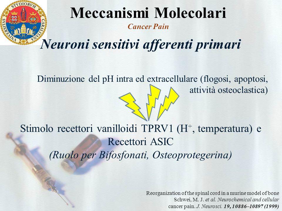 Meccanismi Molecolari Neuroni sensitivi afferenti primari