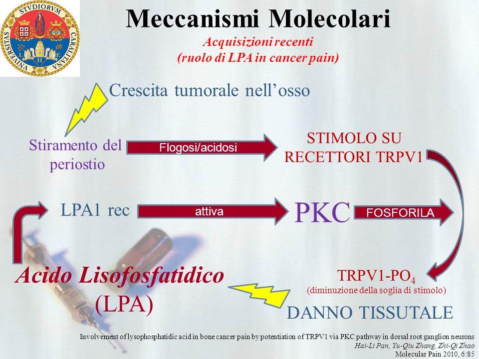 Meccanismi Molecolari (ruolo di LPA in cancer pain)