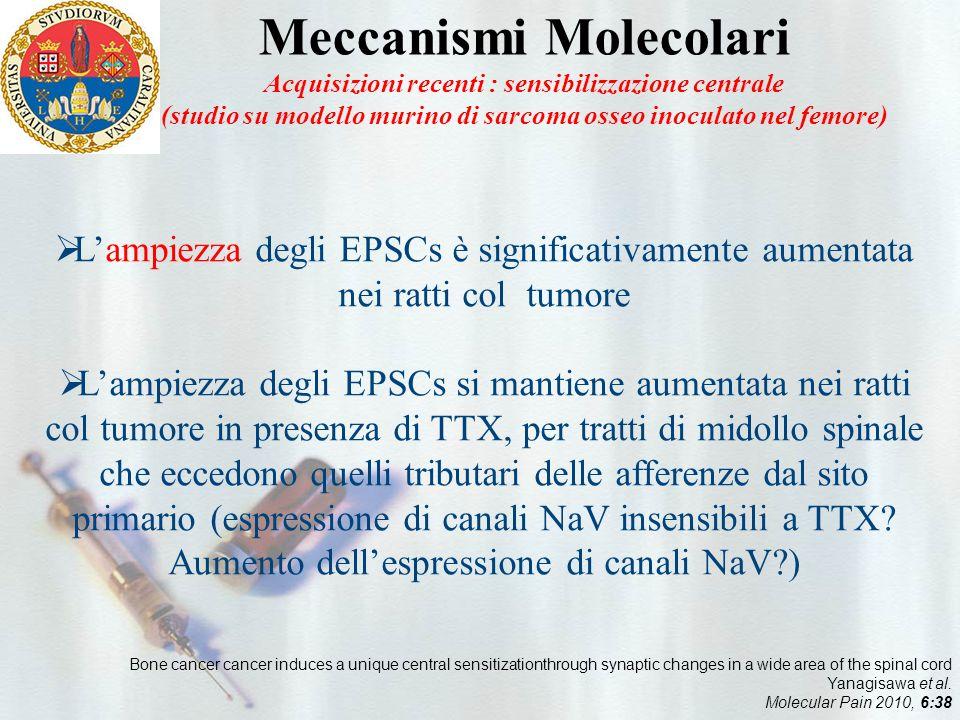 Meccanismi Molecolari