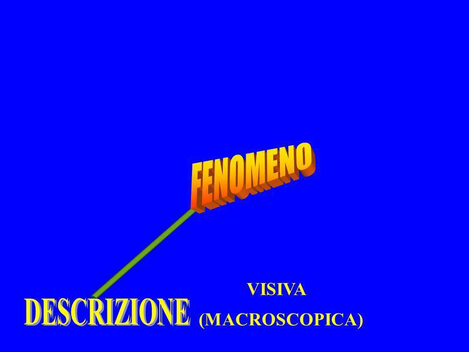 FENOMENO DESCRIZIONE VISIVA (MACROSCOPICA)