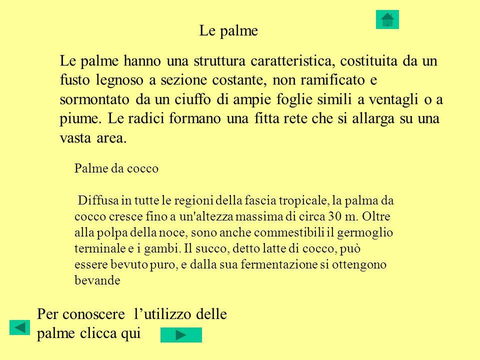 Per conoscere l'utilizzo delle palme clicca qui