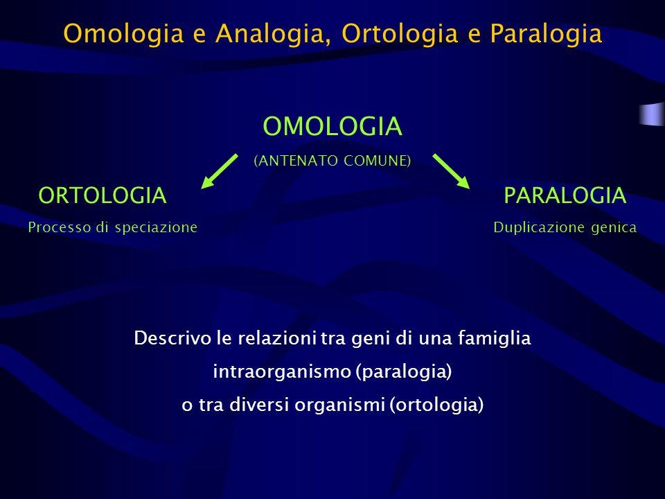 Omologia e Analogia, Ortologia e Paralogia