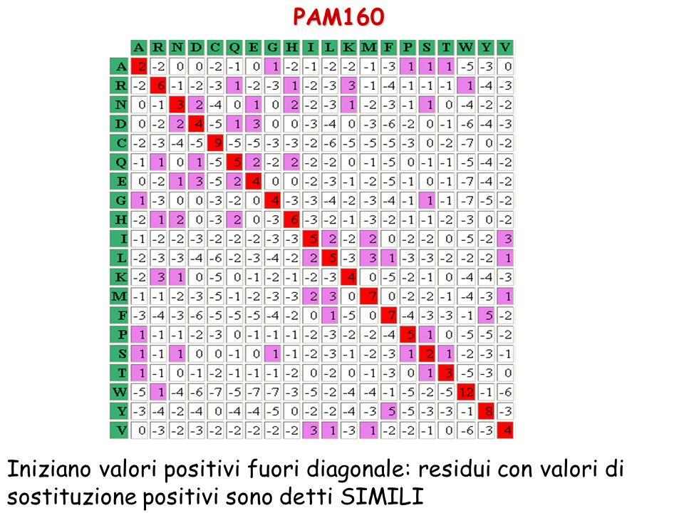 PAM160 Iniziano valori positivi fuori diagonale: residui con valori di sostituzione positivi sono detti SIMILI.