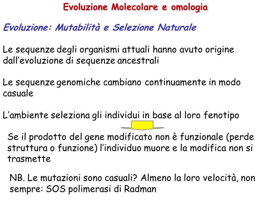 Evoluzione Molecolare e omologia