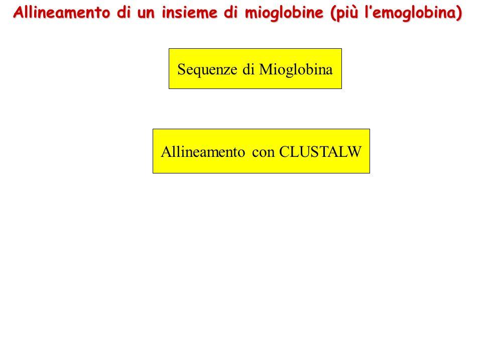 Allineamento di un insieme di mioglobine (più l'emoglobina)