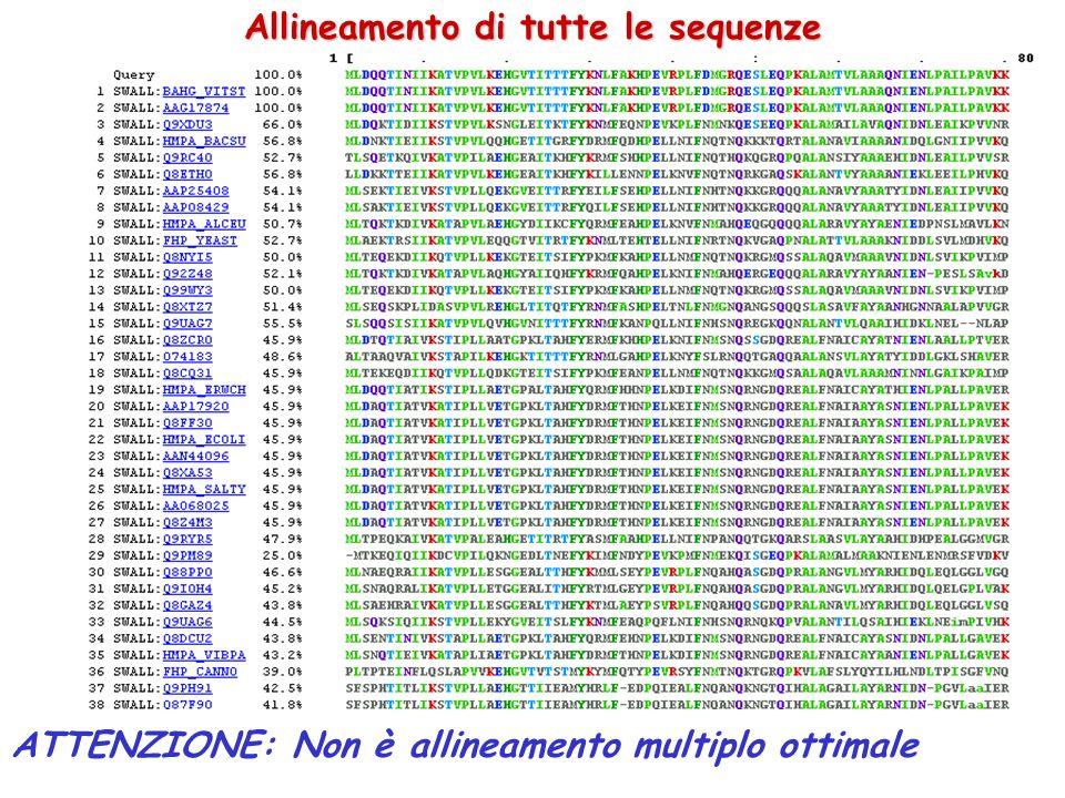 Allineamento di tutte le sequenze