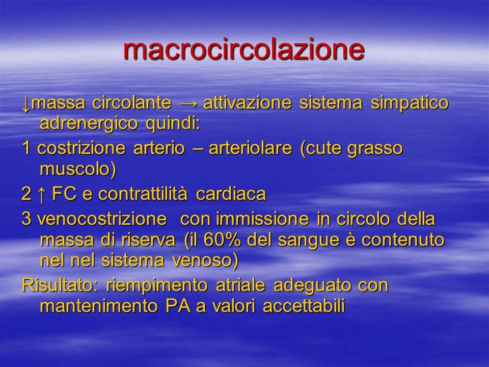 macrocircolazione ↓massa circolante → attivazione sistema simpatico adrenergico quindi: 1 costrizione arterio – arteriolare (cute grasso muscolo)