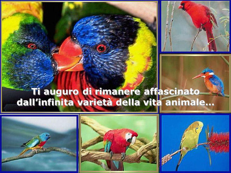 Ti auguro di rimanere affascinato dall'infinita varietà della vita animale…