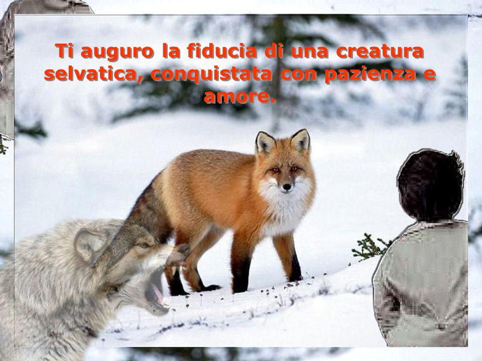 Ti auguro la fiducia di una creatura selvatica, conquistata con pazienza e amore.