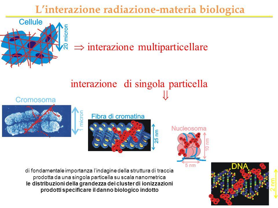 L'interazione radiazione-materia biologica